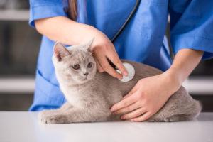 К ветеринару - чаще