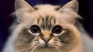 Сколько в среднем живут коты?